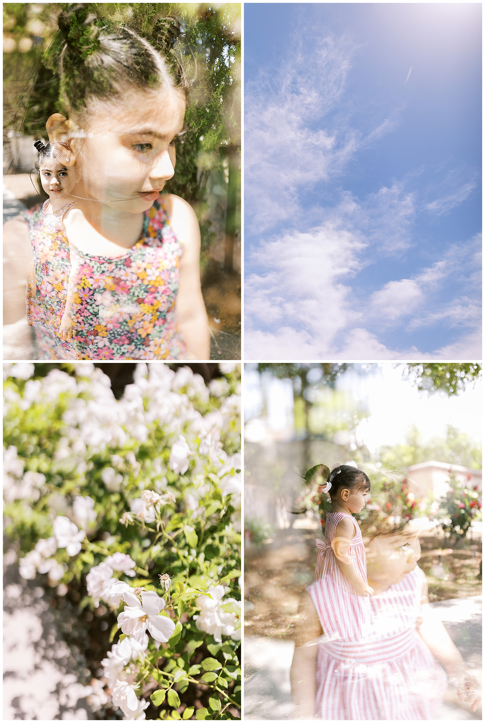 el paso rose garden, el paso mom blogger, el paso garden, el paso photography